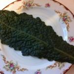 lacinato leaf